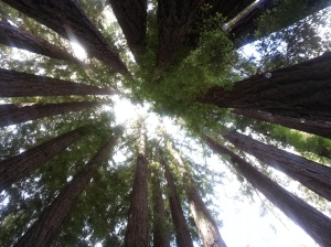 Look, city folk this is what trees look like...